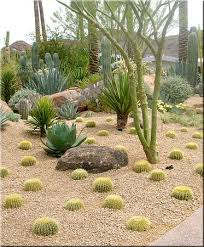 Small Picture Best 25 Arizona landscaping ideas on Pinterest Desert