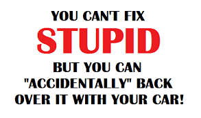 Stupid Funny Quotes Delectable You Cant Fix Stupid Funny Quotes
