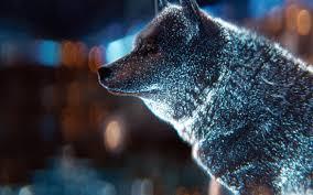 bi06-wolf-digital-dot-art-wallpaper