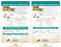 bone identification chart w94 4616 rodent skeleton identification bulletin board chart