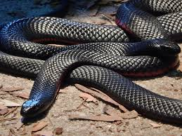 Image result for Photos of snakes in Hell