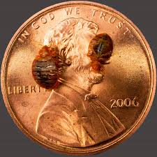 Detection Bed Bugs Tampa Bay Affordable Heat Treatment