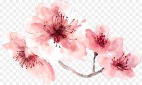 Cherry Blossom Background Png Download 1492 886 Free