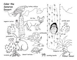 desert animals coloring page and pages