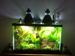 hi everyone right now i have a 10 gallon planted tank for lighting