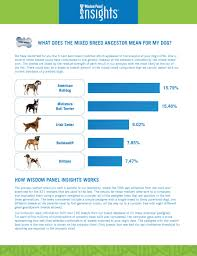 Dog Characteristics Chart The Big Dna Reveal Boogie Notes From A Dog Walker
