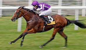 Image result for highland reel horse