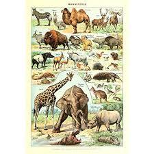 Amazon Com Vintage Poster Print Art Wild Animals