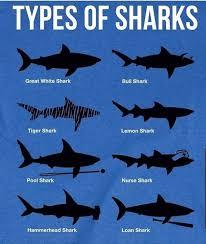 Shark Identification Made Easy Delaware Surf Fishing Com