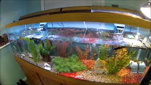 Turtle Tank Decor 125 Gallon Painted Turtle Tank Set Up Youtube