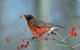 Top 10 Berry Trees and Shrubs <b>Birds Love</b> - Birds and Blooms