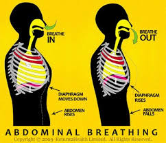 Image result for lower abdominal breathing