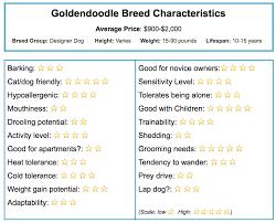 Goldendoodle Size Chart Goldendoodle Breed Information
