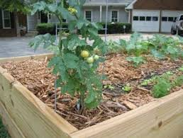 Small Picture Backyard Vegetable Garden Design Landscaping Backyards Ideas