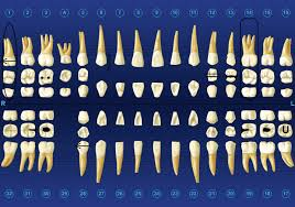 dental charting systems dmd project background research