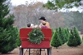 Local Christmas Tree Sales Begin After Thanksgiving  ARLnowcomLocal Christmas Tree Lots