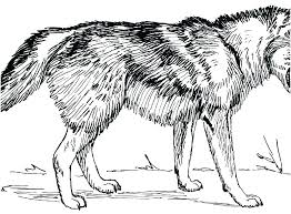 Wolf Coloring Pages To Print F Coloring Pages Printable For Kids