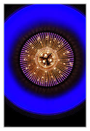 Qualle Der Color Magic Foto Bild Blau Qualle Lampe
