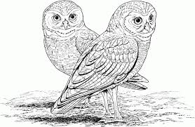 Small Picture Beautiful Cute Owl Printable Coloring Pages Images Coloring Page