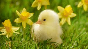 Image result for free images of spring