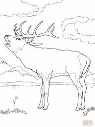 Small Picture Coloring Pages Moose Head Coloring Pages Realistic Elk Coloring