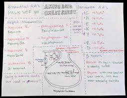 Mcat Amino Acid Chart Amino Acid Cheat Sheet Mcat