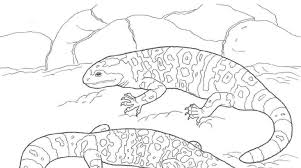 Small Picture Desert Animal Coloring Pages Simple Animal Print Coloring Pages U