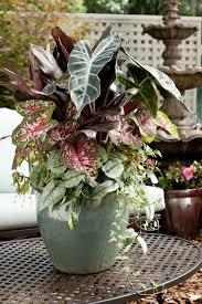 Small Picture Design For Potted Plants For Shade Ideas Ebizby Design
