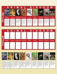 What Are The Animal Kingdoms Chart Animal Kingdom Charts Montessori Research Development