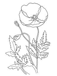 Free Coloring Pages Coloring Poppy Images