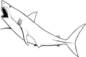 Small Picture The Incredible and Attractive Great White Shark Coloring Page