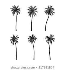 夏 海 やしのイラスト素材画像ベクター画像 Shutterstock