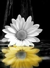 Pin by Misty Sims on Flowers | Color splash art, Sunflower pictures,  Sunflower wallpaper
