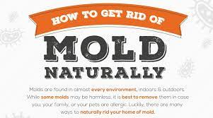 how to remove mold naturally step by