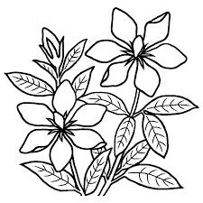 クチナシ梔子白黒夏の花無料イラスト素材