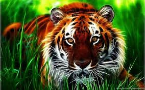 3D Tiger Face HD Wallpapers For Desktop ...