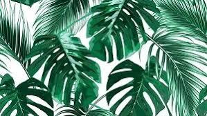 palm trees sunset tumblr. Sunsets \u0026 Palm Trees Sunset Tumblr L