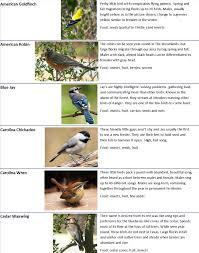Backyard Birds The Woodlands Township Environmental Services