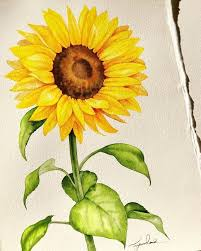 Pin by Lois Rhodes on Pastel/chalk ideas | Sunflower art, Sunflower  watercolor painting, Watercolor flowers paintings