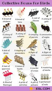 Hindi Birds Name Chart Animal Names Types Of Animals With List Pictures 7 E S L