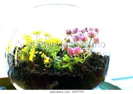 plants in glass bowl succulent plantg plants in glass bowl