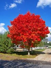 ... Best Trees To Plant In Front Yard 8 17 Best Ideas About Growing Tree On  Pinterest ...