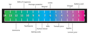 Red Cabbage Juice Indicator Chart Acids Bases And Ph Physics