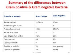 Bacteriology Basics Morphology Classification Staining Methods