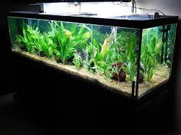 125 Gallon Aquarium Light Hood 125 Gallon Glass Aquarium Glass Aquarium Aquarium Fish Tank