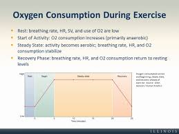 Oxygen Consumption Chart Oxygen Consumption During Exercise