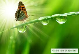 Biomimicry Nine Laws Of Nature And Examples Gallery And Ppt