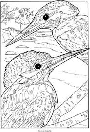 Small Picture Kingfisher On Branch Coloring Pinterest Kingfisher and Free