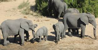 Examples of cv biology   Buy Original Essay Gambassa Wildlife Biologist
