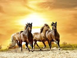 Animals Horses Sunlight Running 1680x1260 Wallpaper